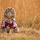 Farm Boy by MudMapImages