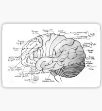Labeled Brain Sticker