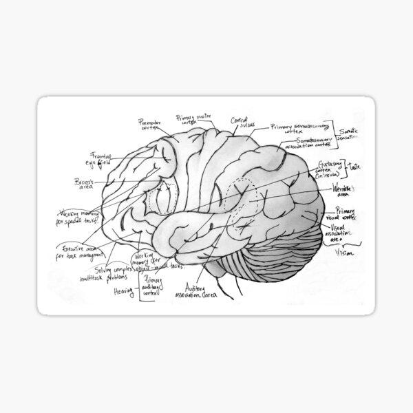Labeled Brain Sticker
