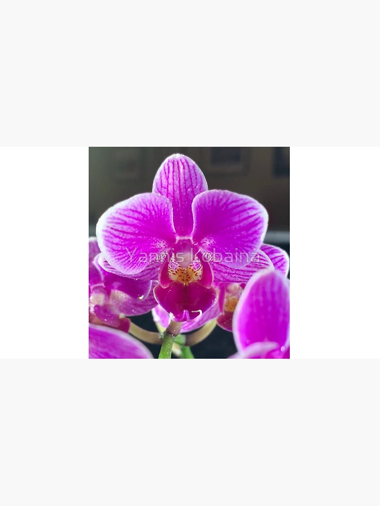 Purple Orchid By Yannis Lobaina by lobaina1979