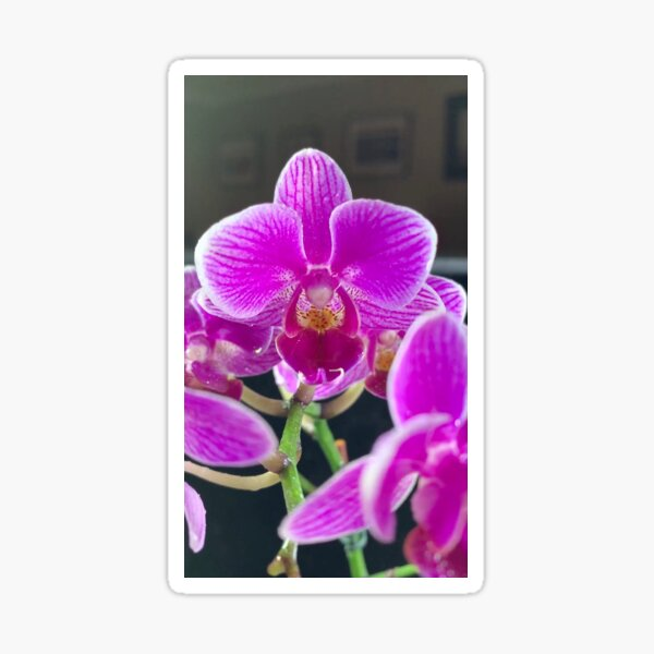 Purple Orchid By Yannis Lobaina Sticker