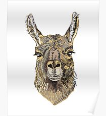 Alpaca Hand drawn illustration. Poster