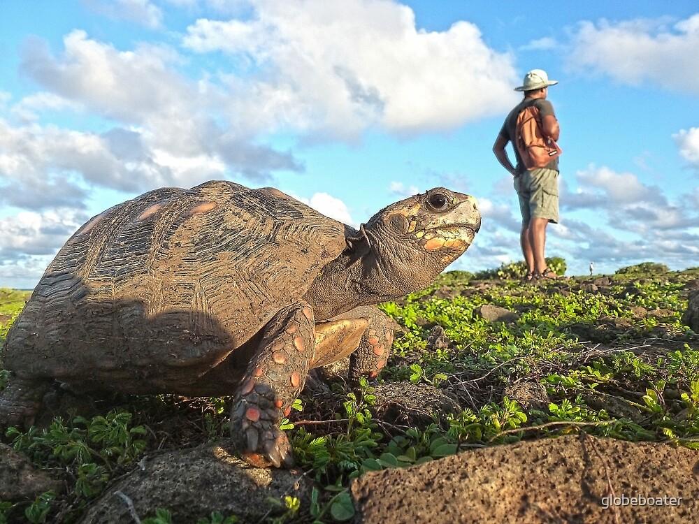 Darwin in Galapagos???? by globeboater