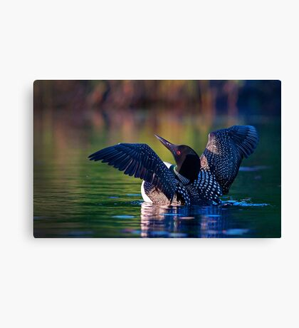 Rise 'n shine - Common loon Canvas Print