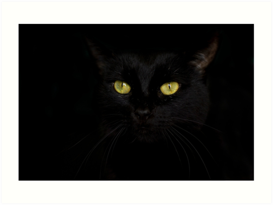 Shadow Cat by Megan Noble