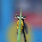 The Shy Damsel.......... by AroonKalandy