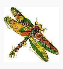Beautifull hand drawn dragonfly Photographic Print