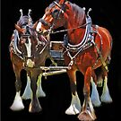 Team Of Shire Horses by Bine
