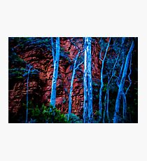 Ghostly Gums Photographic Print