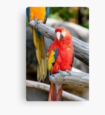 parrot on its perch Canvas Print