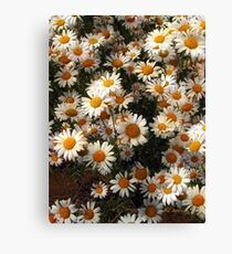 Sunnyside Up Canvas Print