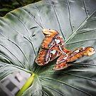 Butterfly House Mackinaw Island MI 3 by Tom Causley