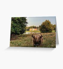 Highland Cow at Avington Park, Hampshire Greeting Card