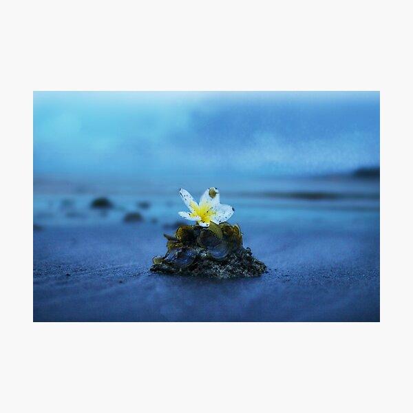 Flower Island Photographic Print