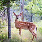 White-Tailed Deer Fawn by Jim Cumming