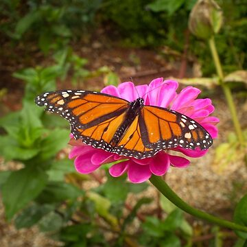 Garden Jewel by hannahsview