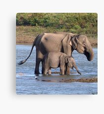 Mother and baby elephant Canvas Print