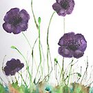 Purple Poppies in the grass by George Hunter