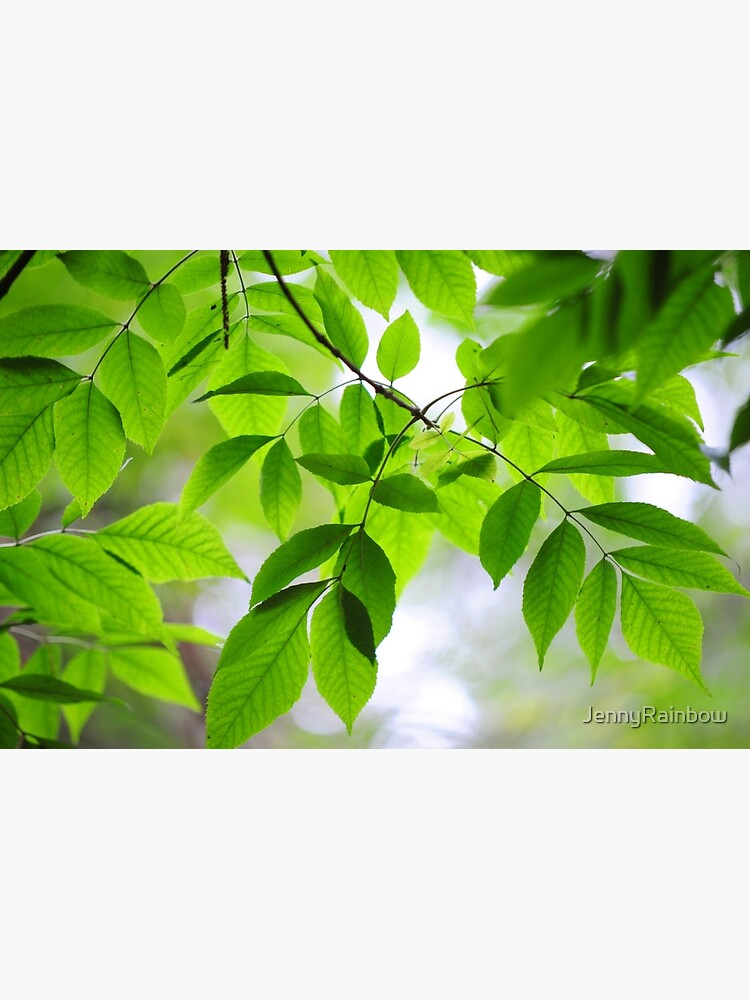Green Leaves of Ash Tree by JennyRainbow