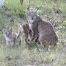 "Momma Lynx With 4 Babies...Only 3 Showing, ""Come On Children,Sit Still"" by MaeBelle"