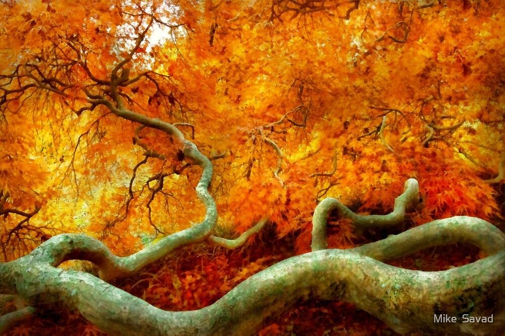 Autumn - Tree - Serpentine by Michael Savad
