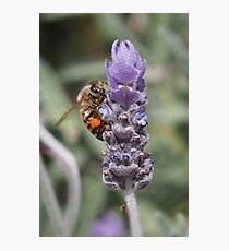 Spring feast Photographic Print
