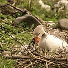 91916 goose nesting by pcfyi