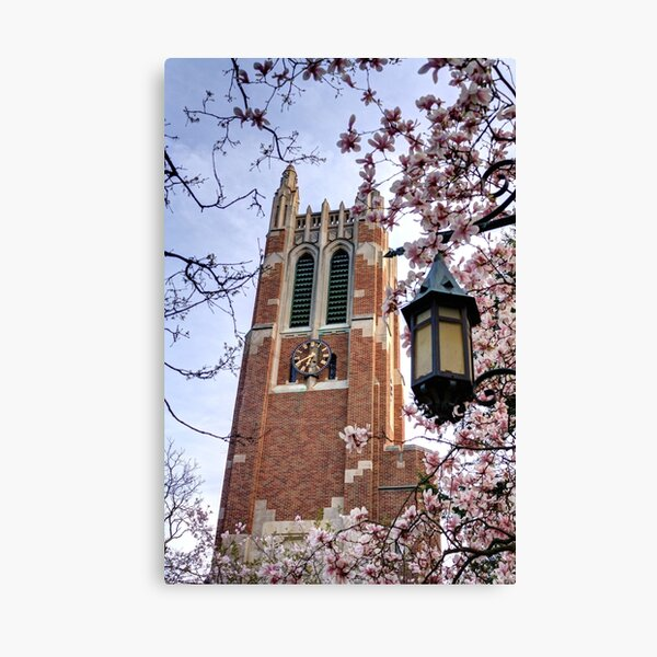 Beaumont Tower through the Magnolias, Michigan State University Canvas Print