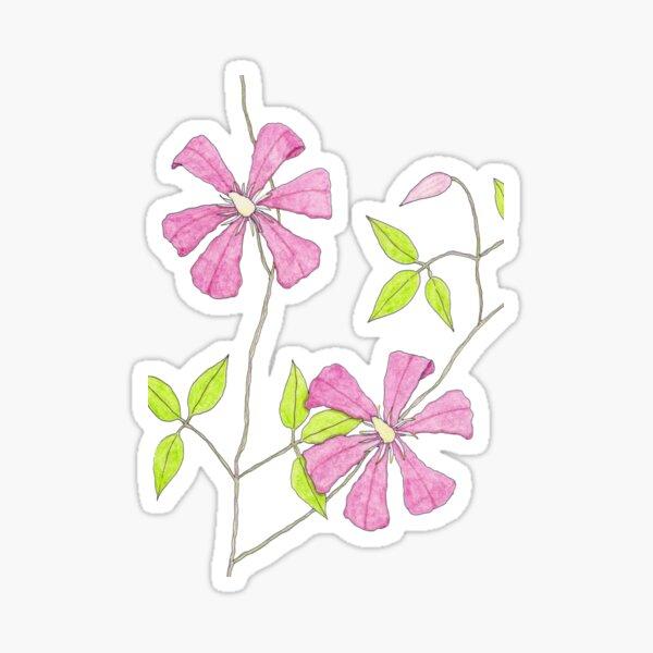 Clematis Sticker