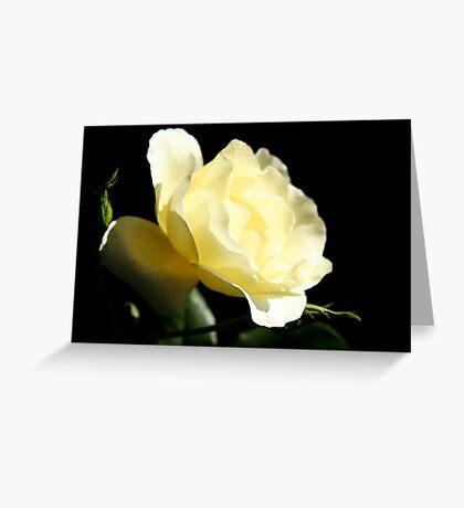 Soft Lemon rose Greeting Card