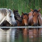 Room for All by Sue  Cullumber