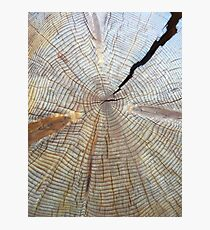 Tree Rings Photographic Print