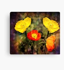 Yellow and Red Poppies Canvas Print