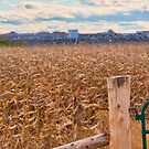 Cornfield Construction by Erick Sodhi