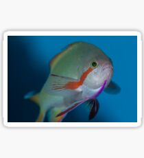 Wrasse flight Sticker