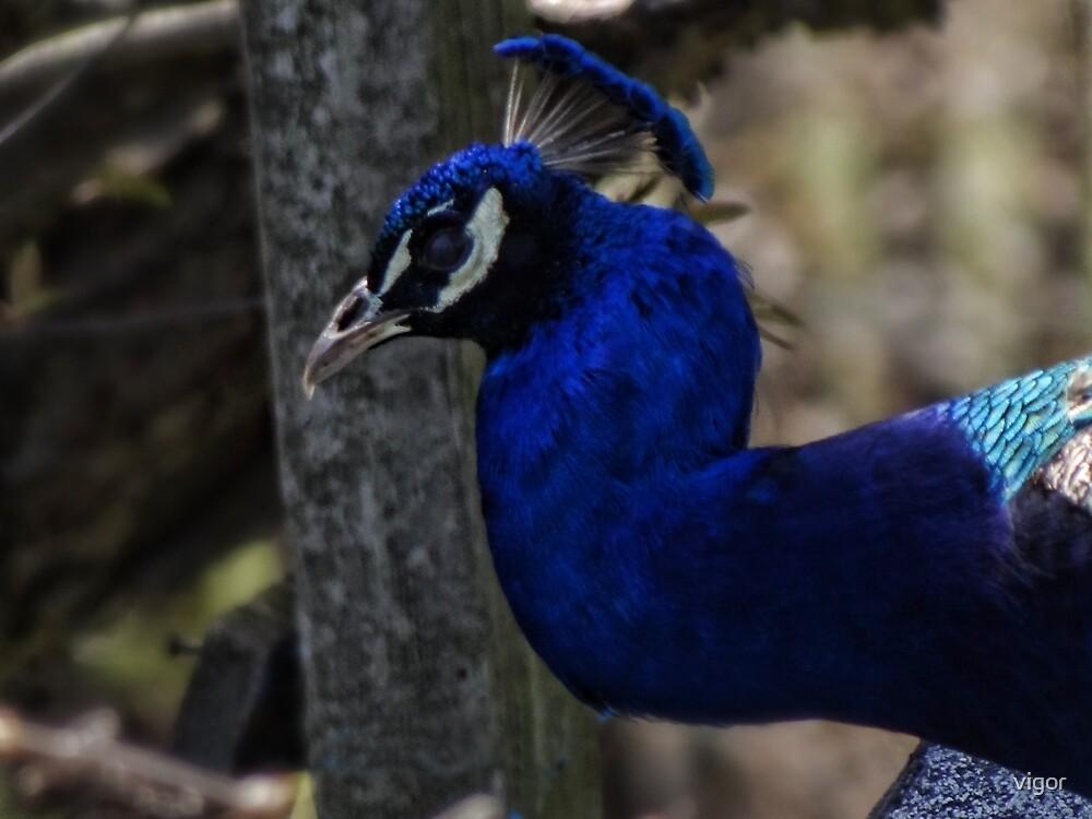 Beautiful Blue by vigor