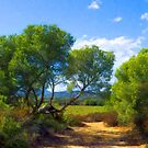 The Lying Pine-Tree Alley by jean-louis bouzou