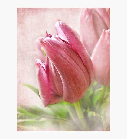 Tulip Fotodruck