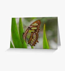 Green Butterfly -Amazon Basin - about hand-sized Greeting Card