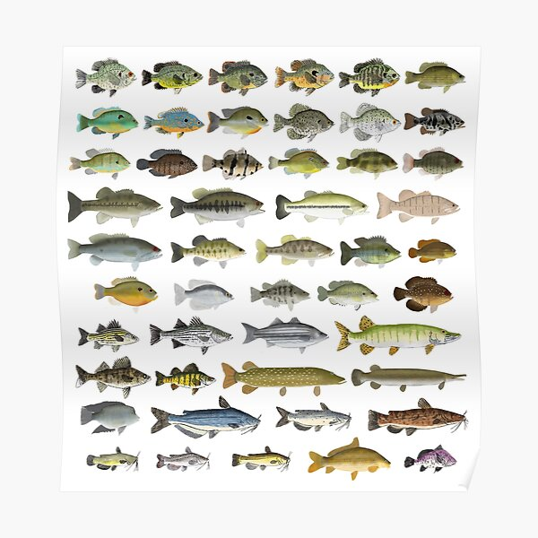 North American Freshwater Fish Group Poster