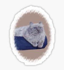 Bayou - A Portrait of a Himalayan Cat  Sticker