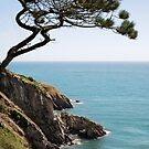 PUDCOMBE COVE by Michael Carter