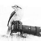 Love my canon 01 by kevin chippindall