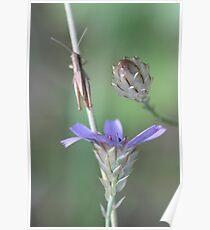 Provence trio Poster