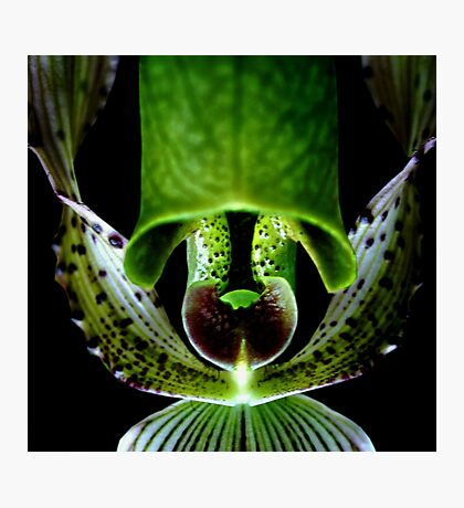 Commando - Orchid Alien Discovery Photographic Print