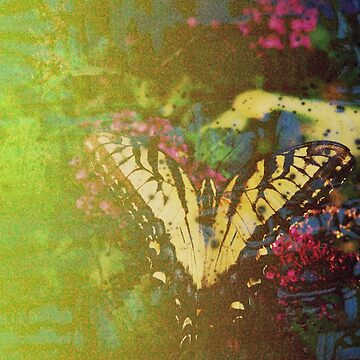 Expired Film Butterfly Double Exposed by angelandspot