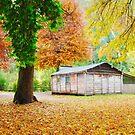 Pickerings Hut, Howqua Hills, Victoria, Australia by Michael Boniwell