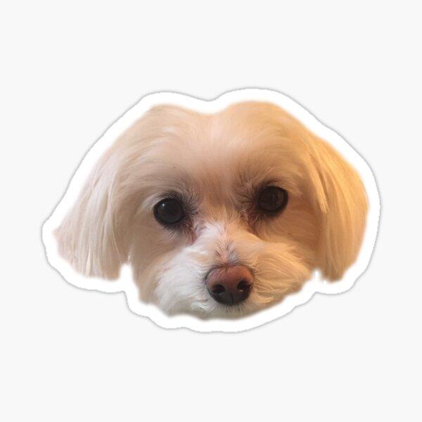 Maltese Face Sticker