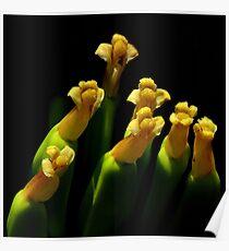 Botanical Choir Poster