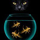 Black Cat Goldfish by Vin  Zzep